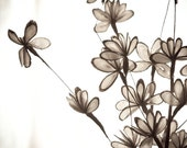 Botanical Photo of Earthy Floral Stems Bathed in Light - Fine Art Photo Entitled Light's Romance - 8 X 8
