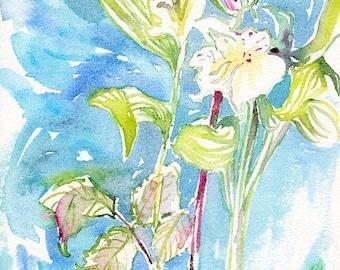 Fresh Pick No.281, original watercolor