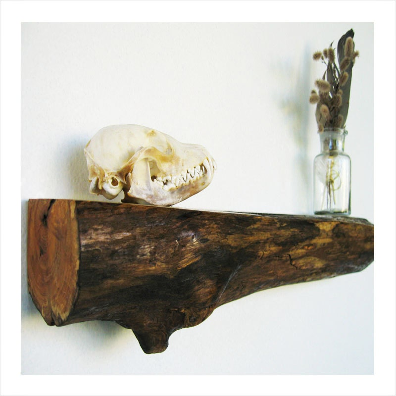 Contemporary Rustic Wooden Log Shelves