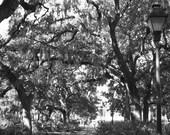 Forsyth Park 2 (11x14)