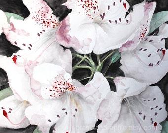 Muscadet Lilies --- 8 x 10 fine art print of an original gouache painting
