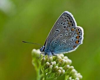 Butterfly - Fine Art Photograph - Elegant Home Decor