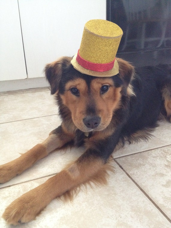 Custom Dog Top Hat