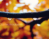Water Droplets - CEJPhotography
