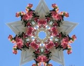 Star Crown of Roses - 12x12 inch print