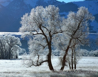 Frosty Winter Day - 8x10 inch photo