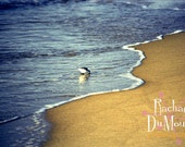 photograph - 8x10, color, nature, beach, bird, lustre print