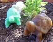 Turtle Soap - stocking stuffer