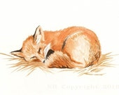 Red Fox Watercolor Painting Fine Art Print