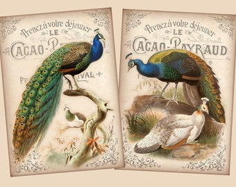 Vintage exotic birds 2.5 x 3.5 inch images digital collage sheet Greeting Cards Craft Tag Label Ephemera Whimsical (303) Buy 3 - get 1 free