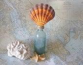 Beach Decor Vintage Aqua Glass Bottle with Lions Paw Seashell