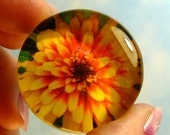 Cyber Monday Etsy Swizzle Zinnia Glass Magnet Best House Plant Ever Nature Flower