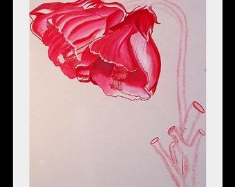 coloured pencil botanical art