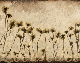 Sepia Daisies - Original Photograph - Distressed Vintage Inspired Flowers Home Decor Wall Art