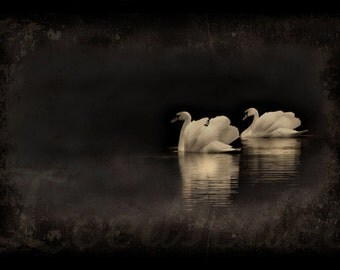White Swans - Textured Vintage Style Original Photograph - Dark Moody Sepia Distressed Aged Photo Home Decor
