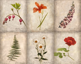 Set of 6 Botanical Prints - Vintage Style Original Photographs - Natural History Textured Distressed Home Decor Instant Collection