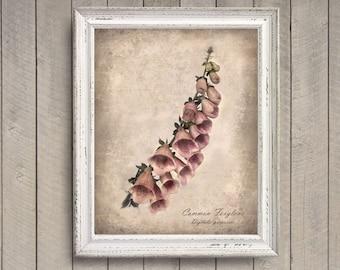 Foxglove Botanical Print - Vintage Style Original Photograph - Distressed Texture Pink Flower Floral Garden Home Decor Wall Art