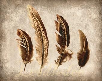 Feather Collection 1 - Original Photograph - Nature Specimen Autumn Fall Bohemian Tribal Rustic Home Decor Wall Art