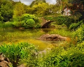 Summertime in Central Park - Original Photograph 8x10 - Frog Pond Ivy Covered Bridge Turtle Green Lush NYC Landmark