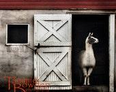 Llama  - Original Photograph - Rustic Grey Red Country Barn Farmhouse Wall Decor