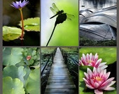 Pond Collection - Six Prints - Fine Art Photography - Purple Lotus Lily Dragonfly Boardwalk Water Lilies Rowboats Instant Decor Wall Art