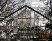 Abandoned Greenhouse 2 - Ruins Decay Overgrown Barren Trees Grey Ethereal Spooky Garden Old Estate Original Photograph