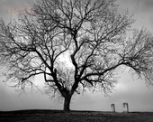 Love Lasts Forever - Original Photograph - Dark Gothic Romantic Love Tree Silhouette Cemetery Graveyard Black and White Headstones Eternity