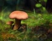 Mushrooms - Original Photograph - Brown Green Backyard Close Up Woodland Forest Mossy Blush Pink