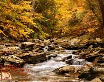Forest Stream in Autumn - Original Photograph - Yellow Green Nature Landscape Home Decor Wall Art