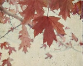 """Nature Leaf  Photograph - Vintage Inspired -Red Maple Leaves Fine Art Photography 8x8 inches """"Autumn Days"""""""