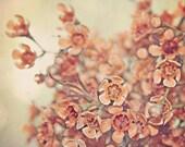 "Fall Holiday Photography - Fall Harvest -Autumn Orange Flowers - Affordable Home Decor - Baby Nursery 5x5, 4x6, 5x7  - ""Tangerine Dream"""