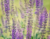 """Purple Lavender Photo (w/ dark and light green) - Floral with Texture - Original and Signed - Fine Art Photograph 5X5 - """"Bright Lavender"""""""