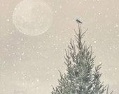 SALE 50% OFF - Christmas Photograph - Little Blue Bird - Winter Holiday Snow Photograph - Fine Art Photograph