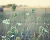 Dreamy Fields - Landscape Photo - (Sage green, Amber, and Ivory) -Baby Nursery - Home Decor - Fine Art Photograph Print