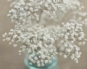 "Baby's Breath Photograpy, Home Decor, Baby Nursery, Shabby Chic, Rustic Decor, 8x8 inches - ""Baby's Breath"""""