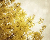 """Nature Photography - Spring Forsythia - Dreamy and Vintage Inspired - Home Decor - Baby Nursery - Fine Art Photography 8x10 - """"Happiness"""""""