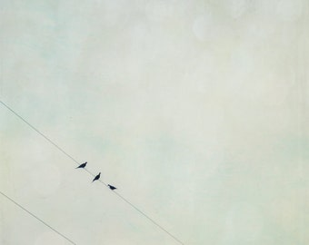 Birds On A Wire - Pale Vintage Blue - Vintage Inspired and Dreamy - Home Decor  - Fine Art Photograph 5X5