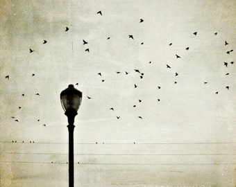 "Bird Photography - Sky Photograph - Flying birds -Nature Photography - Neutral Home Decor - Fine Art Photograph ""Parisian Moment"""