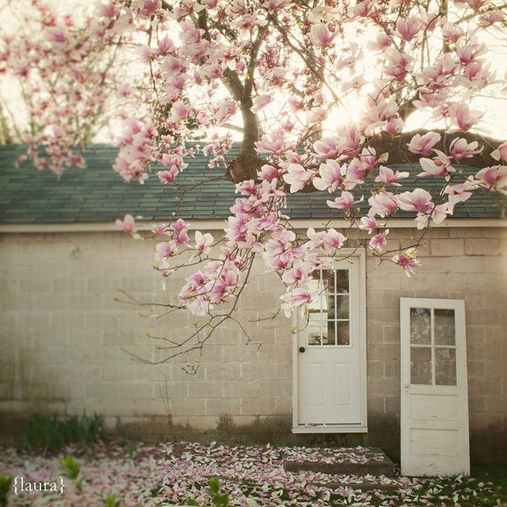 "Magnolia Photography- Tree Nature Door  - Cottage Chic - Home Decor - Fine Art 8x8 - ""Magnolia Tree"""