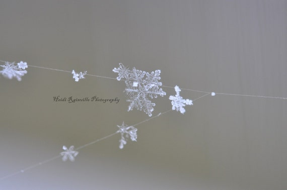 https://www.etsy.com/listing/72320691/snowflakes-on-a-spiderweb-5x7-macro