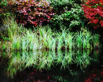Autumn Reflections in the Reeds 8x10 Fine Art Photography
