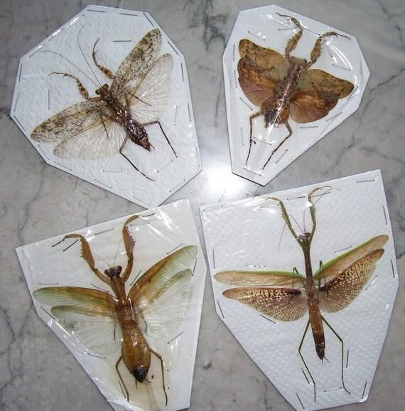 Praying Mantis Collection - SHIP FREE