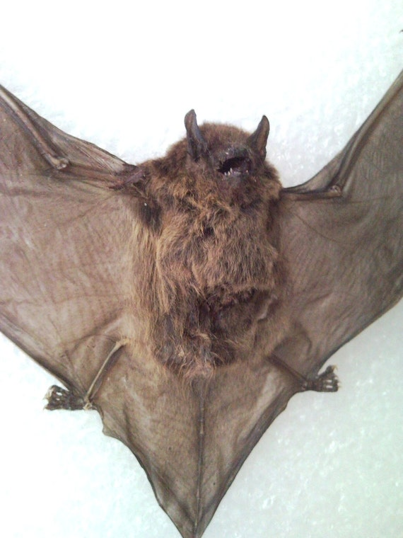 Vampire Bat - SHIP FREE