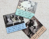 Magnet Set of Three for the Pet Lover