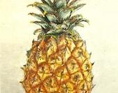 Pina, pinapple, 8x10 matted to11x14, original watercolor