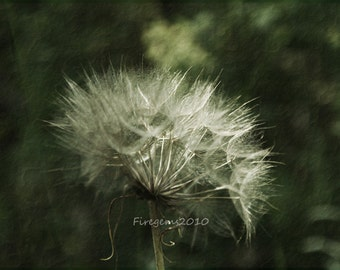 Fine Art Photography-Photo-Print-Picture-Nature- Flower- Green-White-