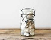 Old Jar with Shells