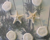 Genuine Starfish and Sea Biscuit Magnets (mixed set of 7)
