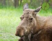 BOGO SALE - The Moose - 8 x 10 Fine Art Photographic Print