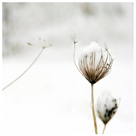 Photography Home Wall Art Flower Botanical Winter Snow Graphic Square Colour -  Delicate